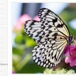 SEO práctico paso a paso (2/5) – Temática, keywords y contenidos