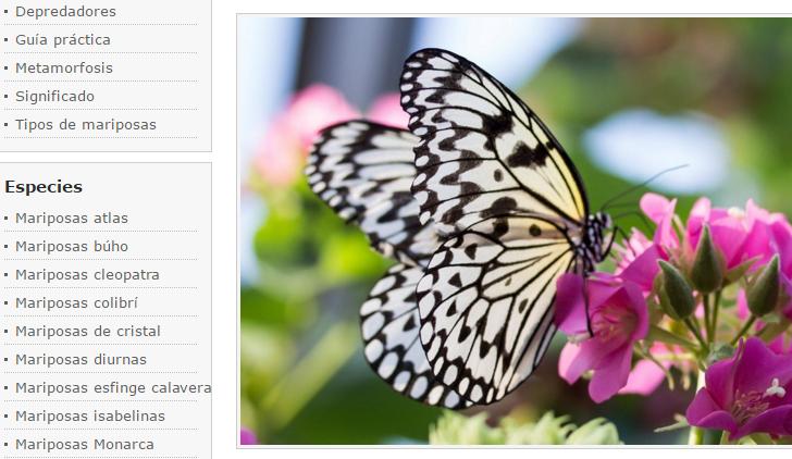 Menú mariposas